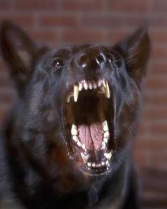 growling_dog